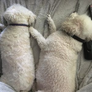 """Other - """"Sleeping Topper and Spinner"""" so peaceful.. my 🐶"""